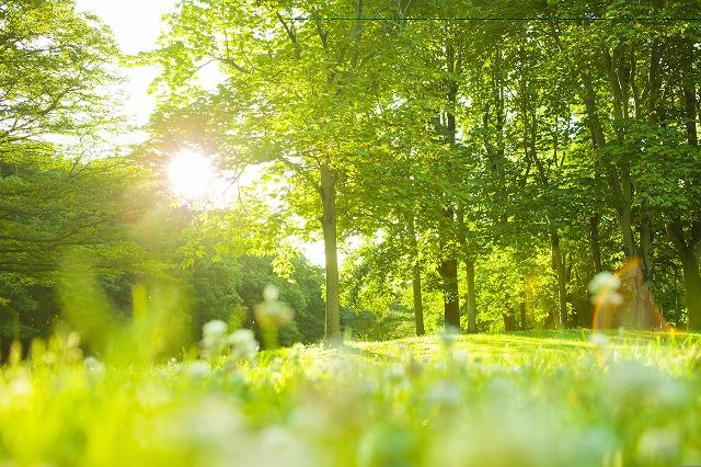 樹木葬 北九州 月影霊園